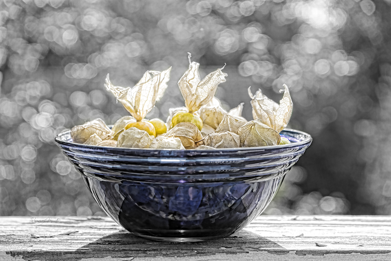 Blue Bowl with Groundcherries