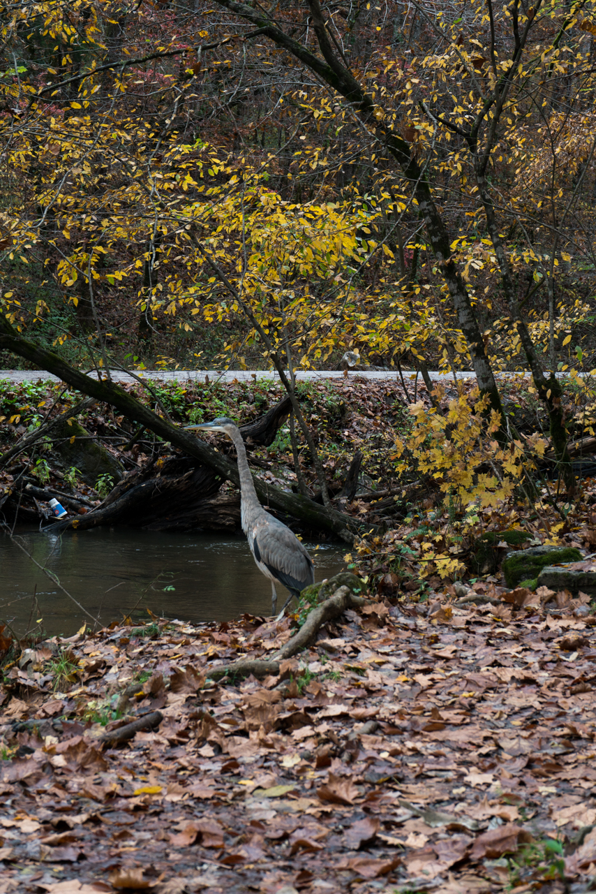 Heron at the Grist Mill