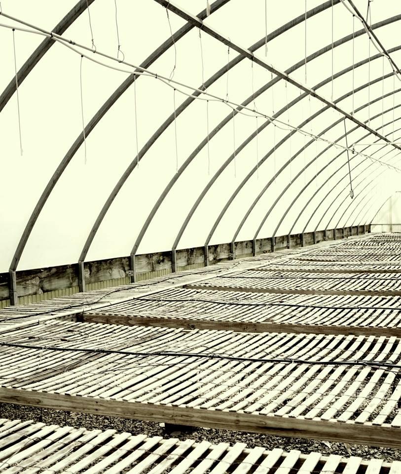 Inside an Empty Greenhouse